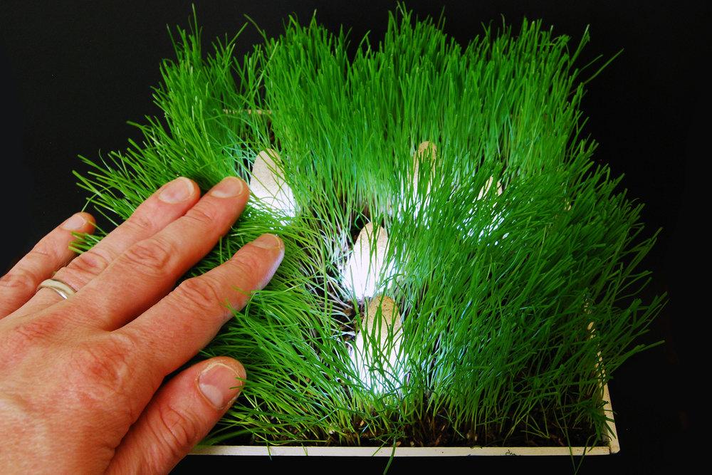 Grass_core test 05.18.16_B.jpg