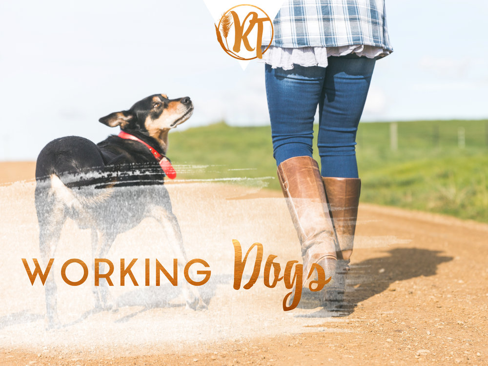 working-dogs-farming
