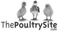 poultry site_gs.jpg
