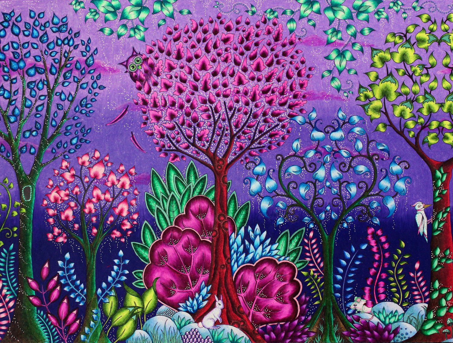 Coloring Enchanted Forest By Johanna Basford Emily Illustrator