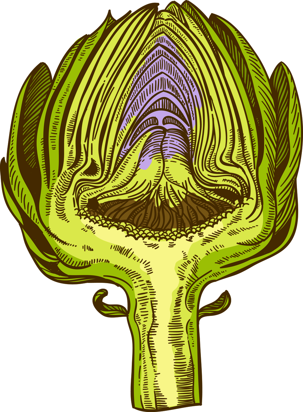 This is an artichoke cut in half