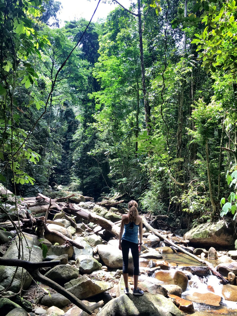I have been on some amazing, nourishing hikes this month.  This one was in Kubah National Park in Borneo.  Nature = nourishment.
