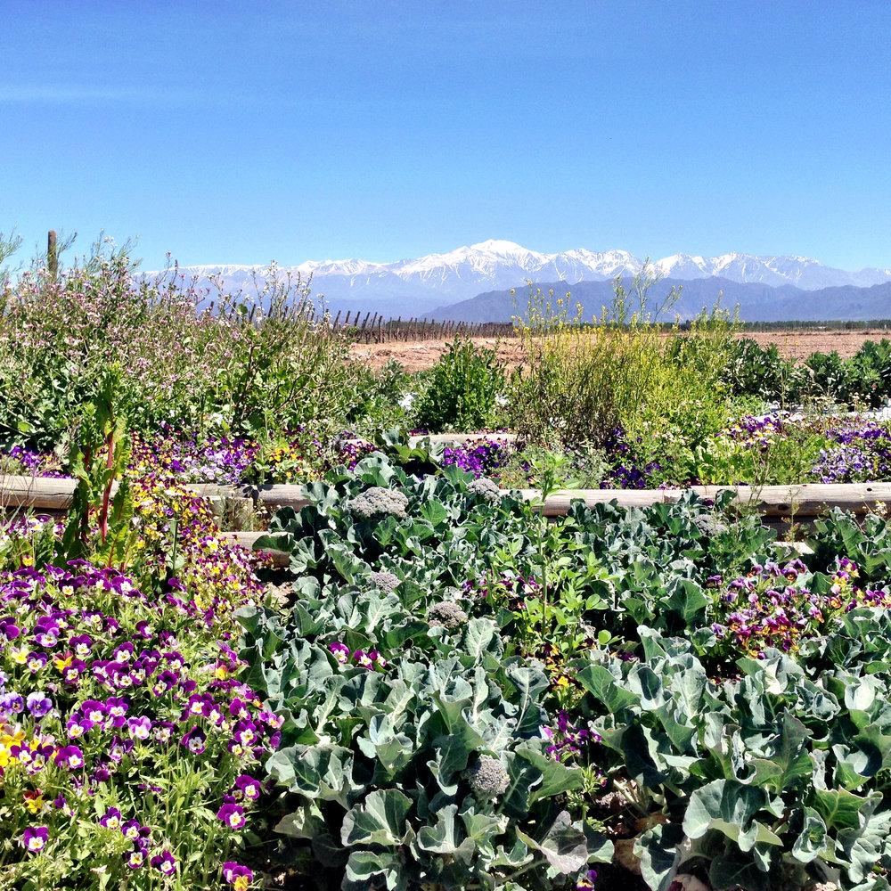Mendoza, Argentina (The Andes!)