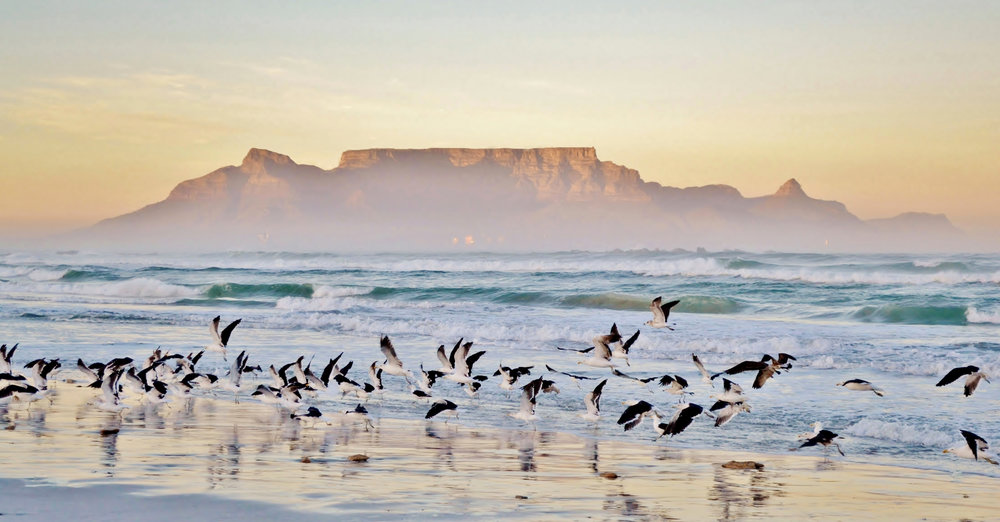 south africa cape town wildlife photography tourism