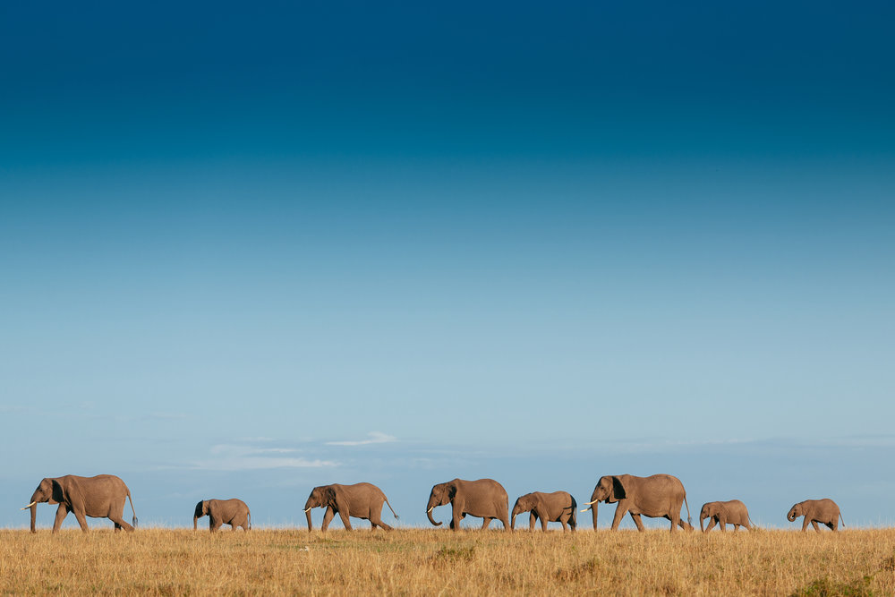 south africa addo elephant national park