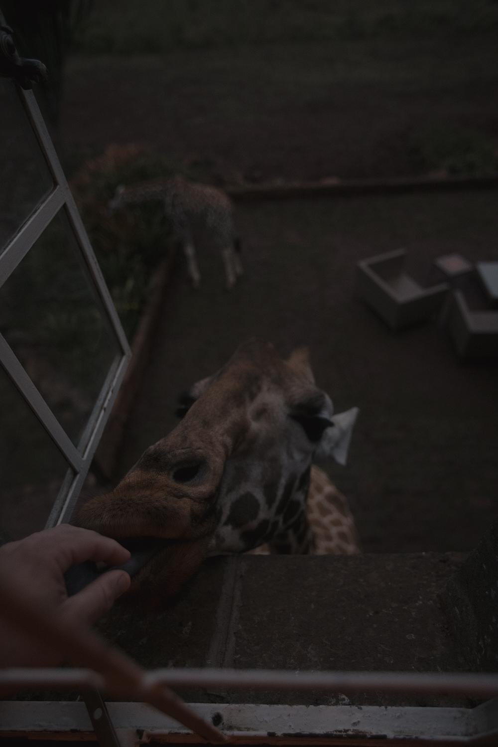 Girafferoom.jpg