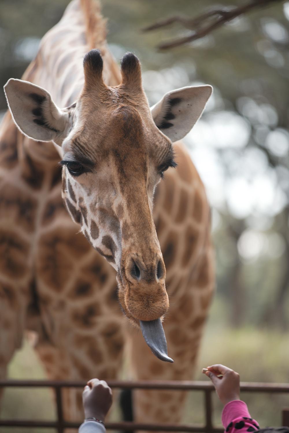 Public Giraffe Feeding Location 2 Min walk away.