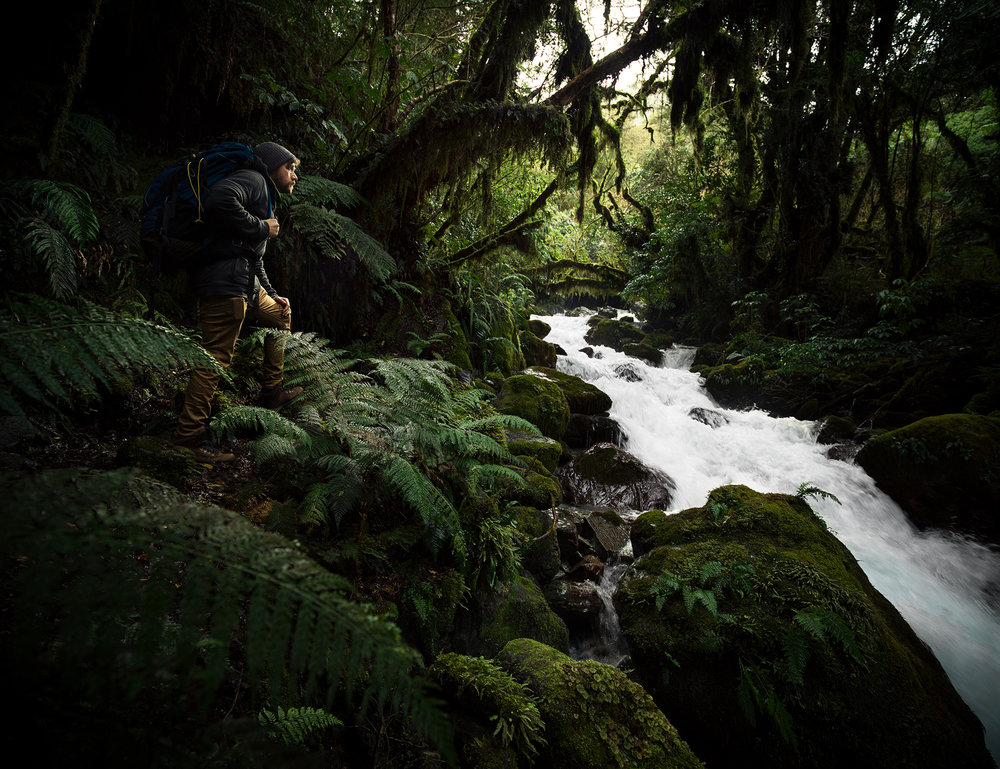Will Fiordland Forest.jpg
