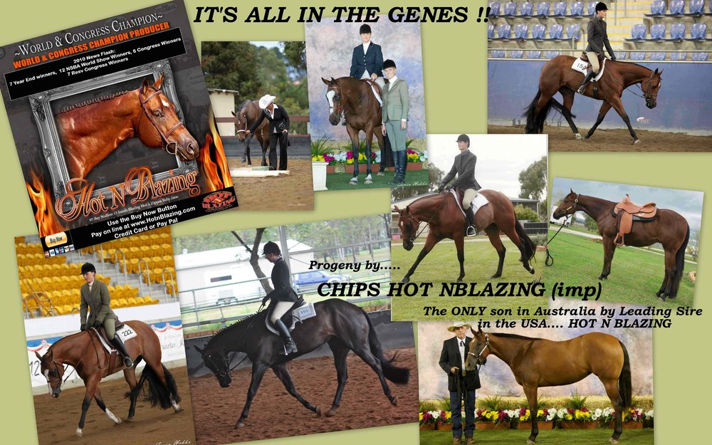 chips collage.jpg