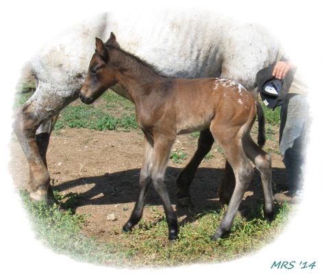 Filly 2014