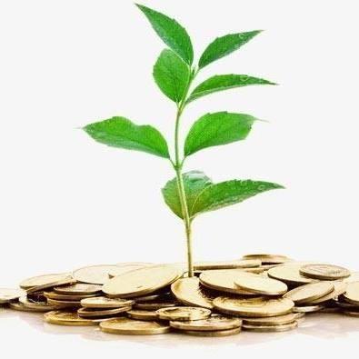 coins plant.jpg