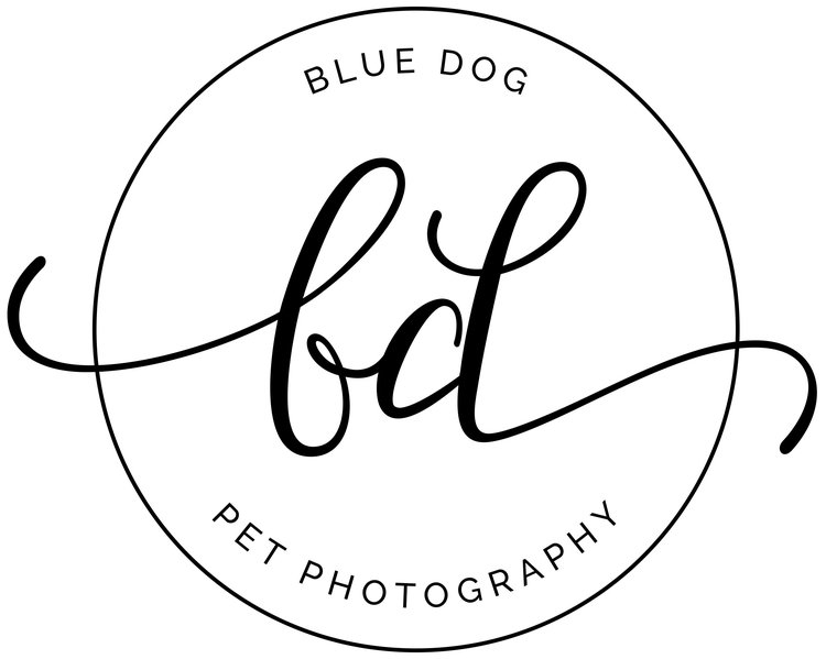 Blue Dog Pet Photography