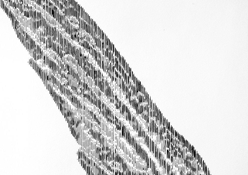 marlin 5.jpg