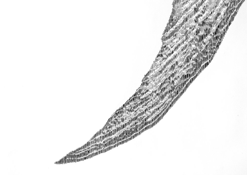 marlin 6.jpg