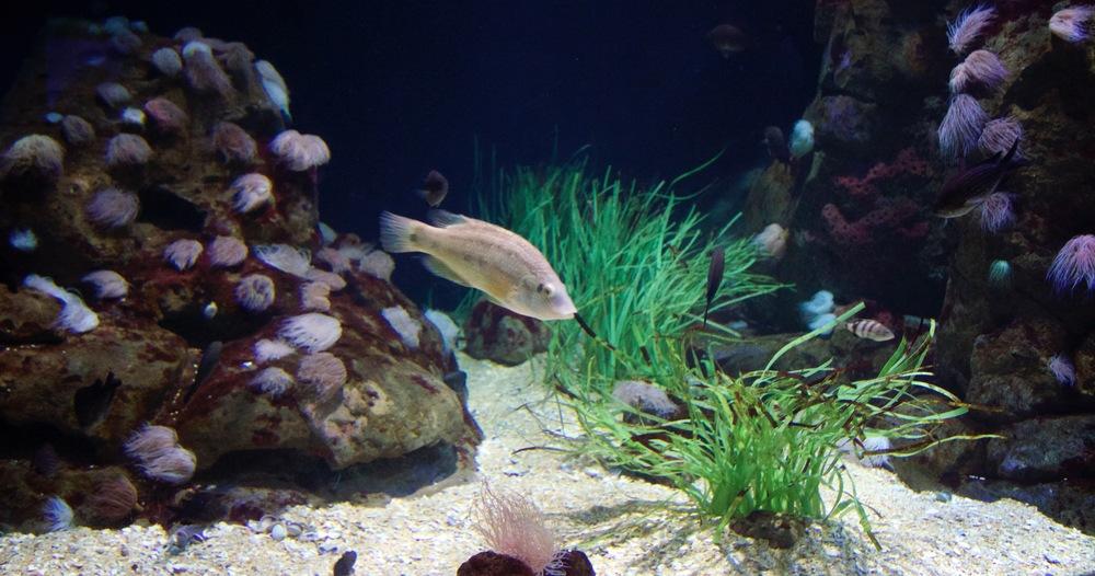 Fish Community.jpg