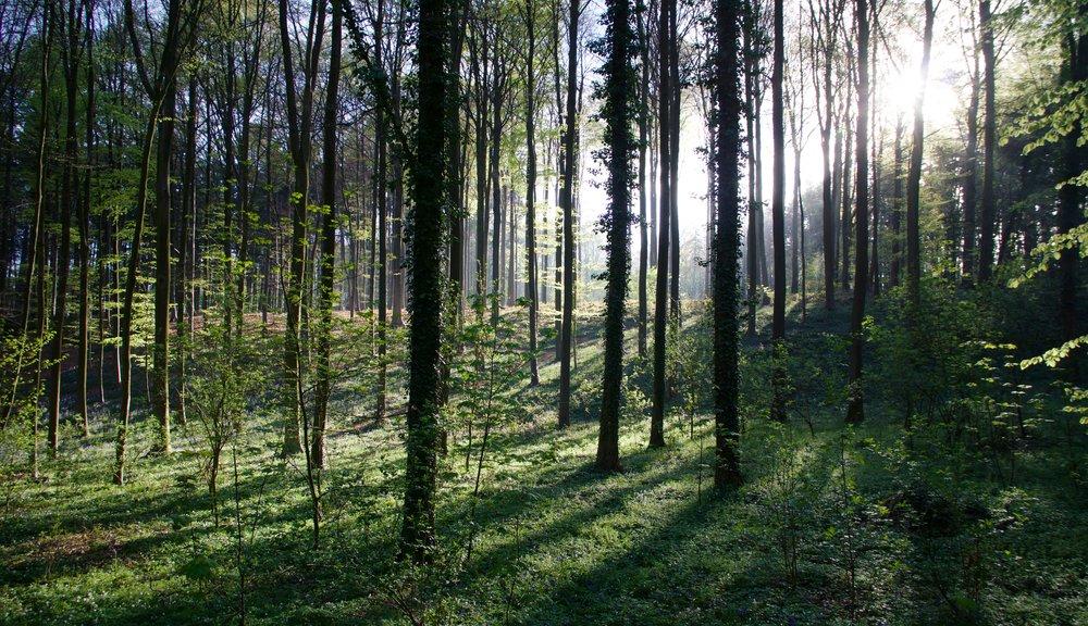 Piercing Through the Forest.jpg