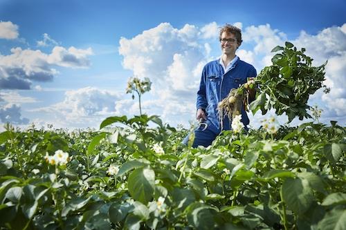 Dit is Arwin, onze favo aardappelboer voor de Agria's!