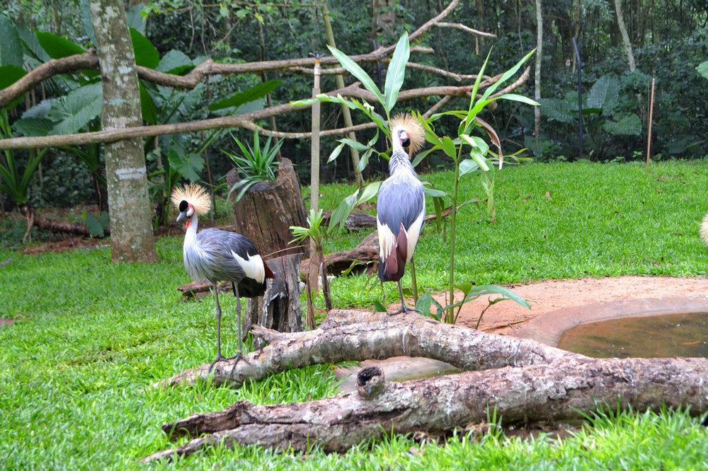 Bird Park Iguassu Falls