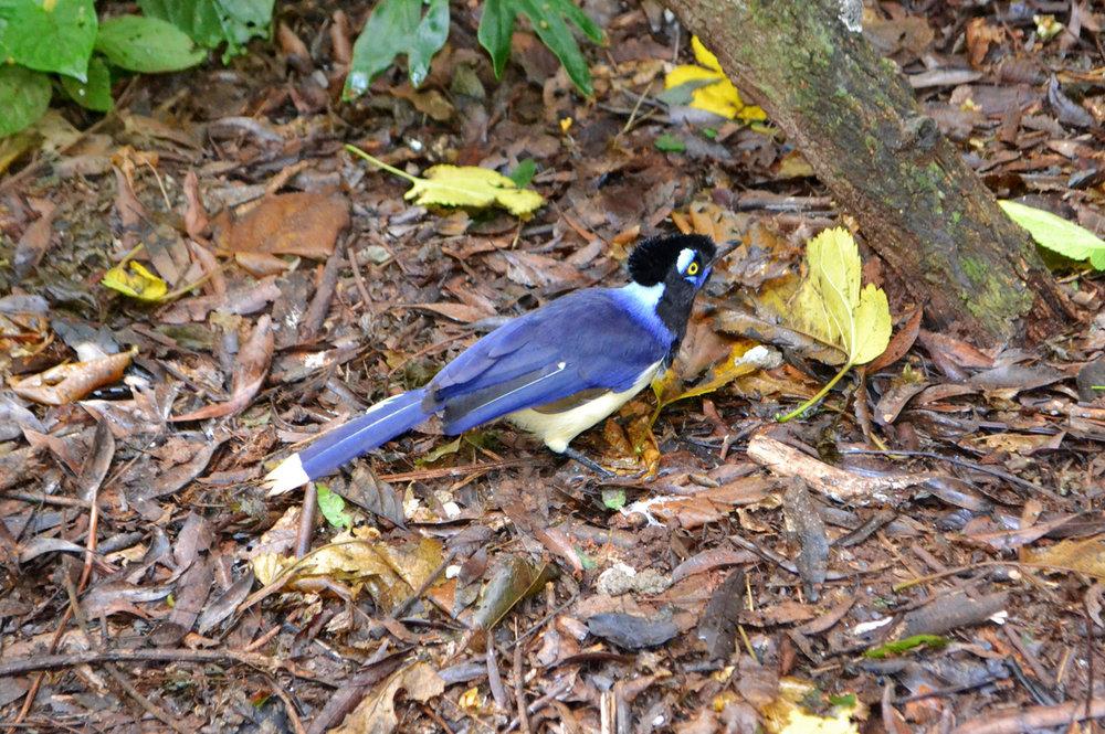 Bird Park in Iguassu Falls