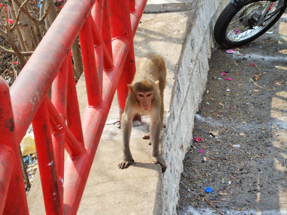 A monkey at Sanghi Temple