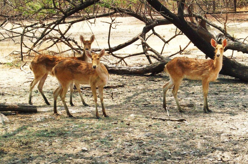 Hyderabad Zoo