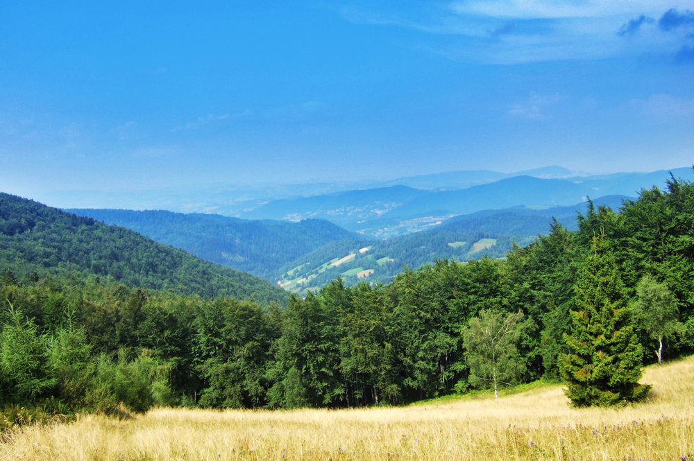 Forested hills of Beskid Sadecki