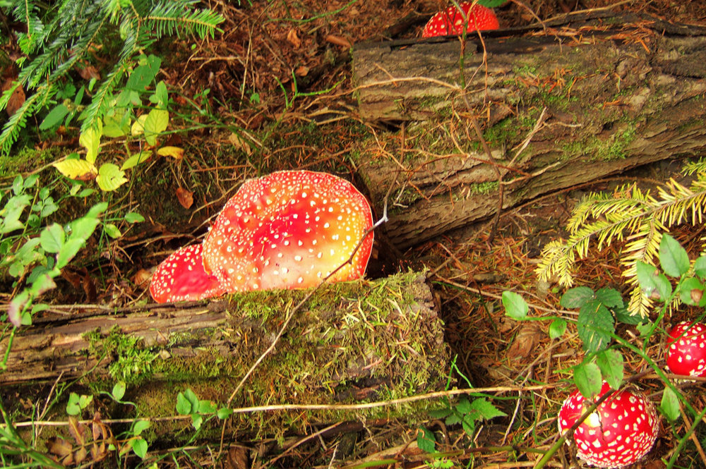 Toadstools - just like in a fairy tale