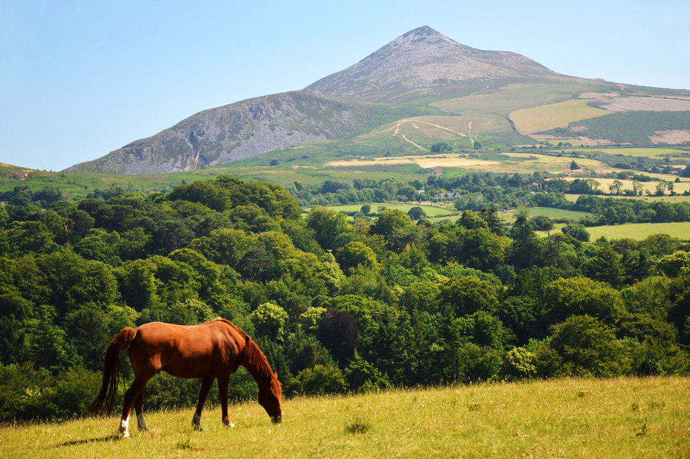 Powerscourt Gardens and the Sugar Loaf mountain