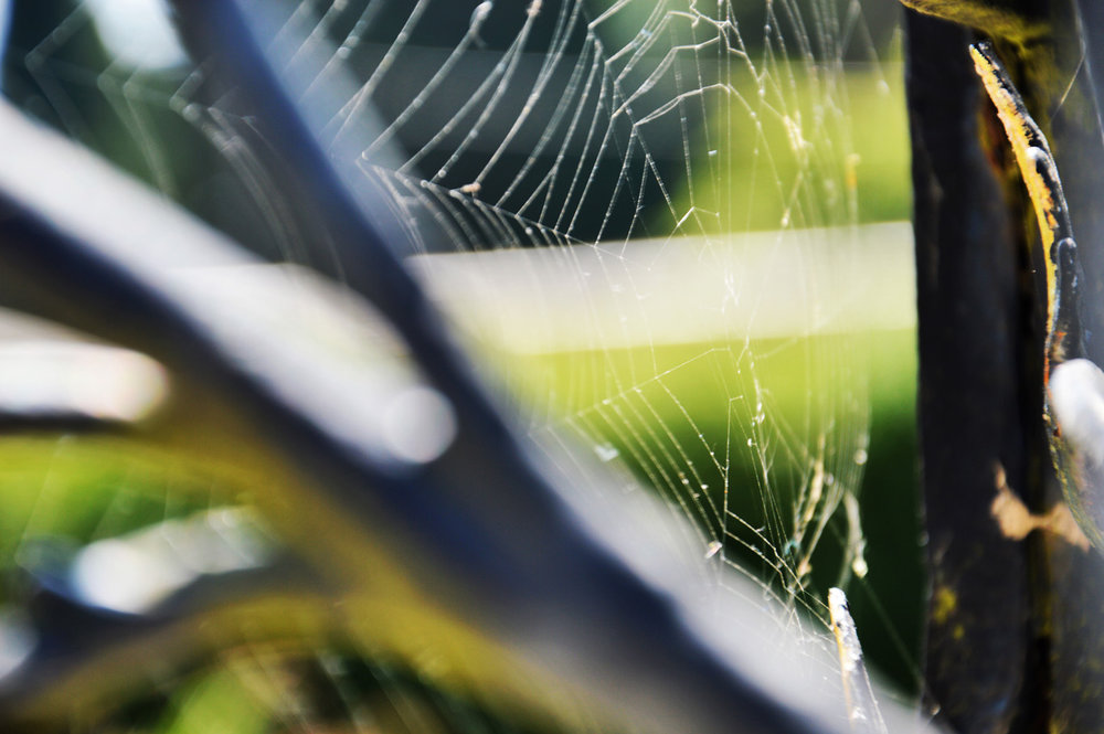 A spiderweb on a gate