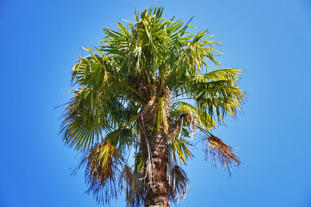 Who said palm trees can't grow as far north as Ireland?