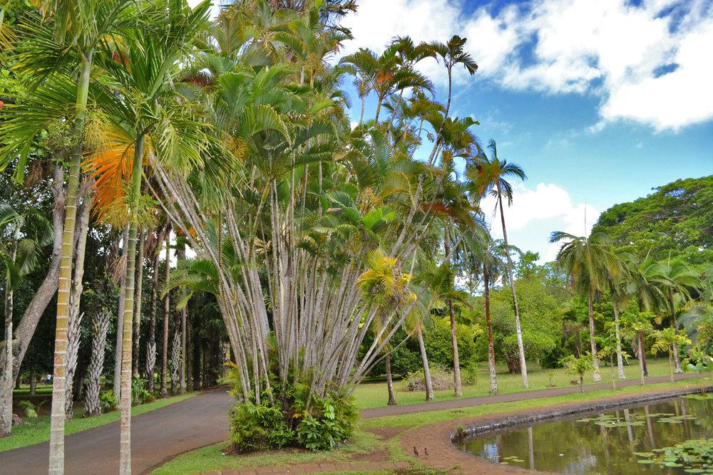 Pamplemousses Botanic Gardens