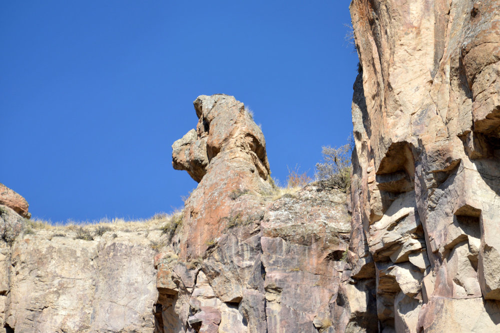 A rock in the shape of a dog head