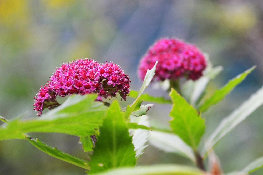 Wild flowers at Czarny Staw