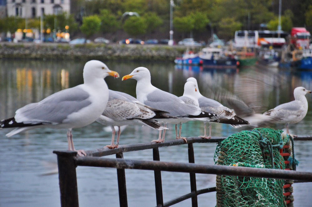 Seagulls in the harbor