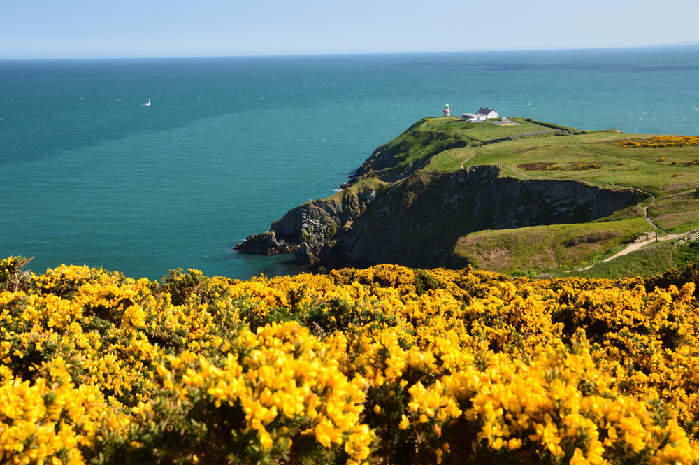 The lighthouse and the ubiquitous yellow gorse in the foreground