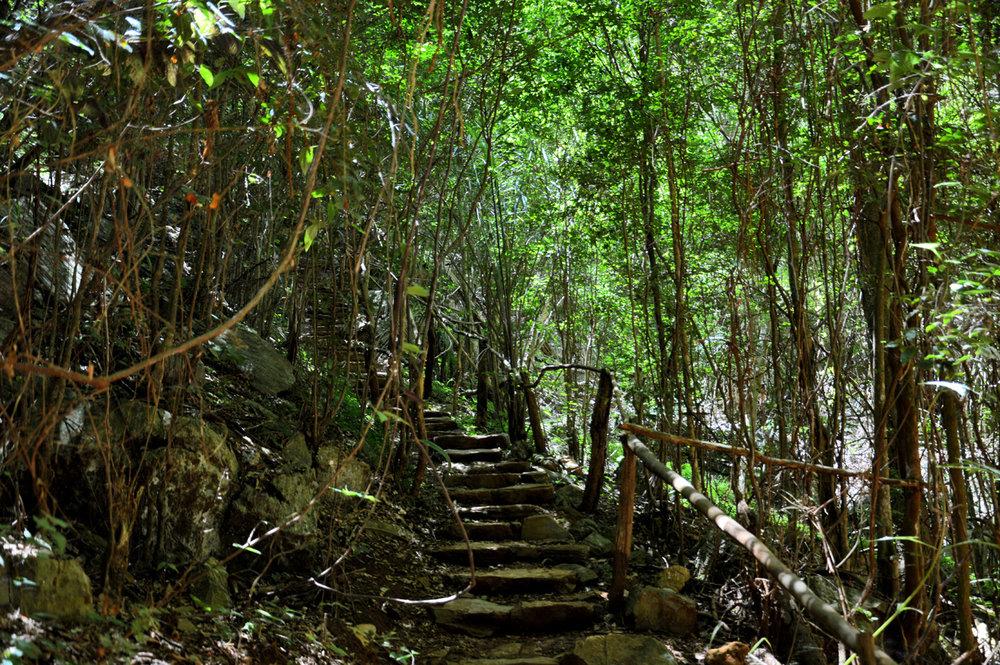 Bosque, frente, caverna