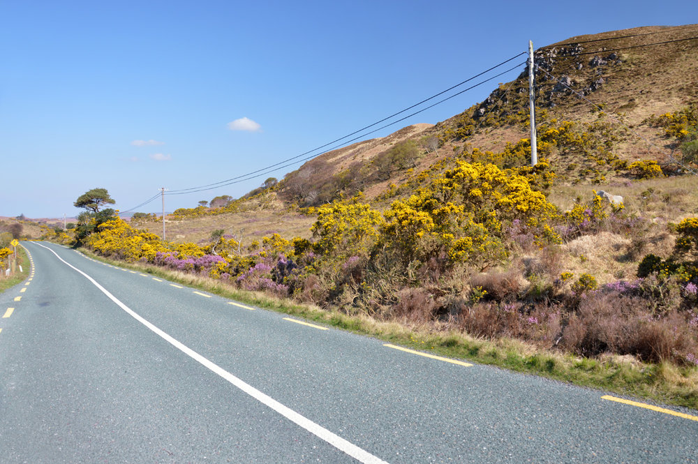 Purple-yellow landscape