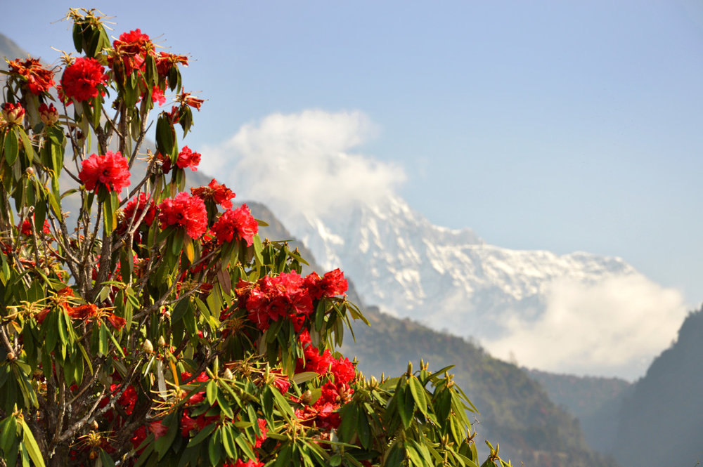 Spectacular view on the trail to Poon Hill