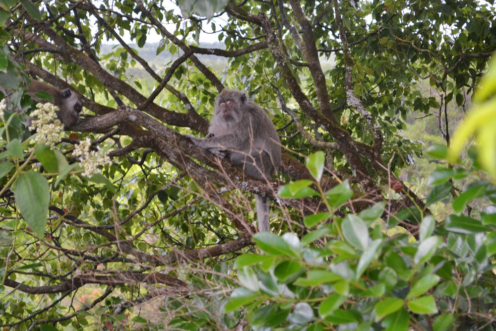 A monkey resting on a tree