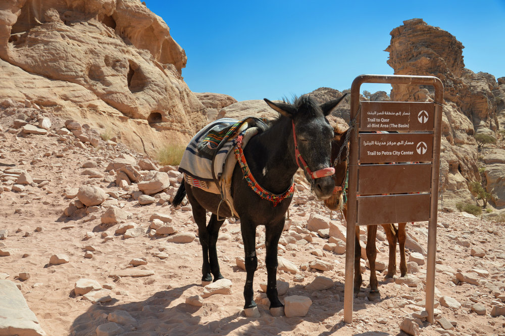 Donkeys having some rest at the sign pointing back to Petra