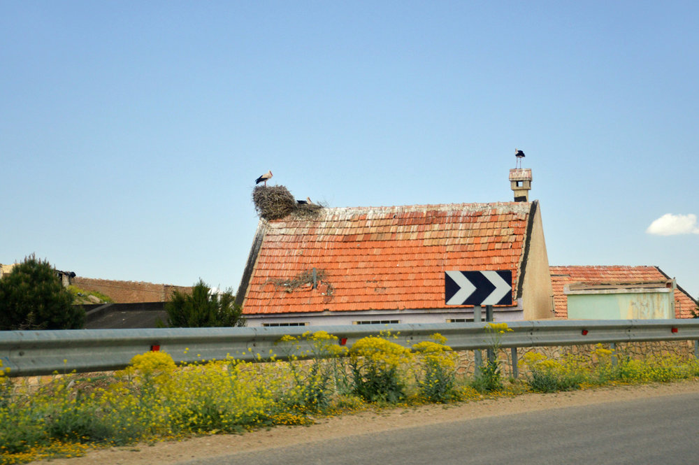 Stork nests - you might think this photo was taken in Eastern Europe