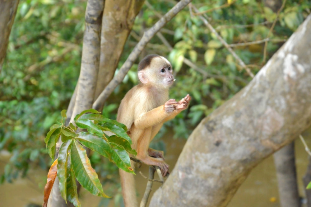 Monkey at lake Januari