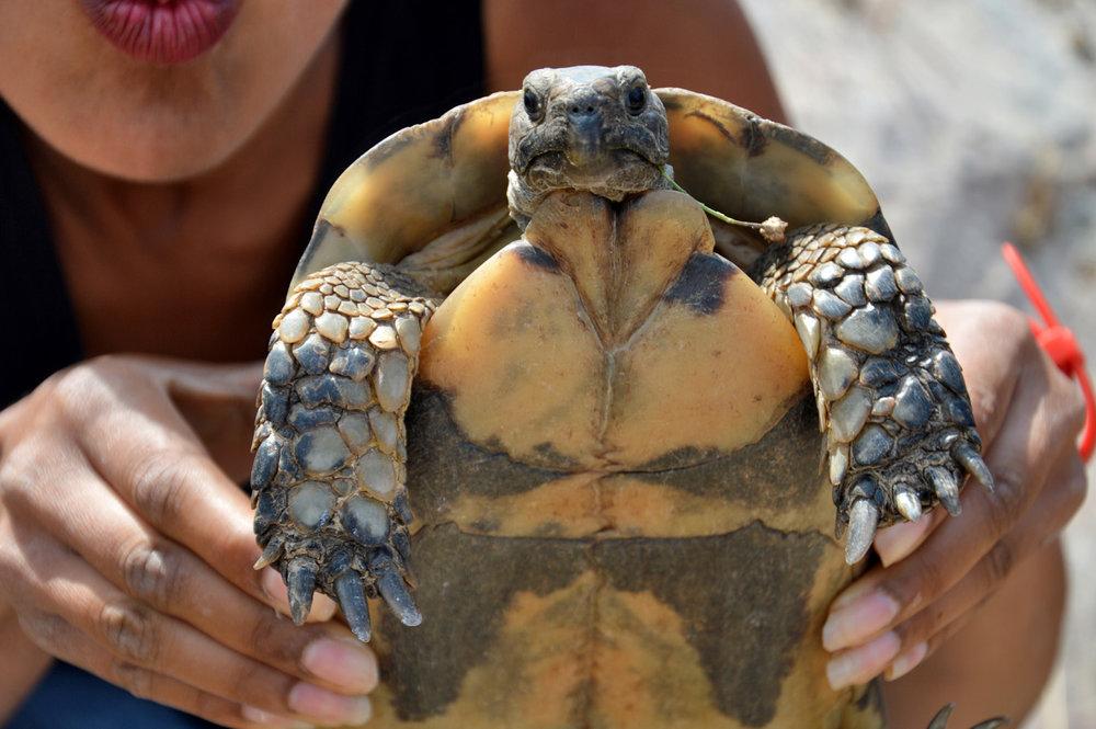 A cute tortoise