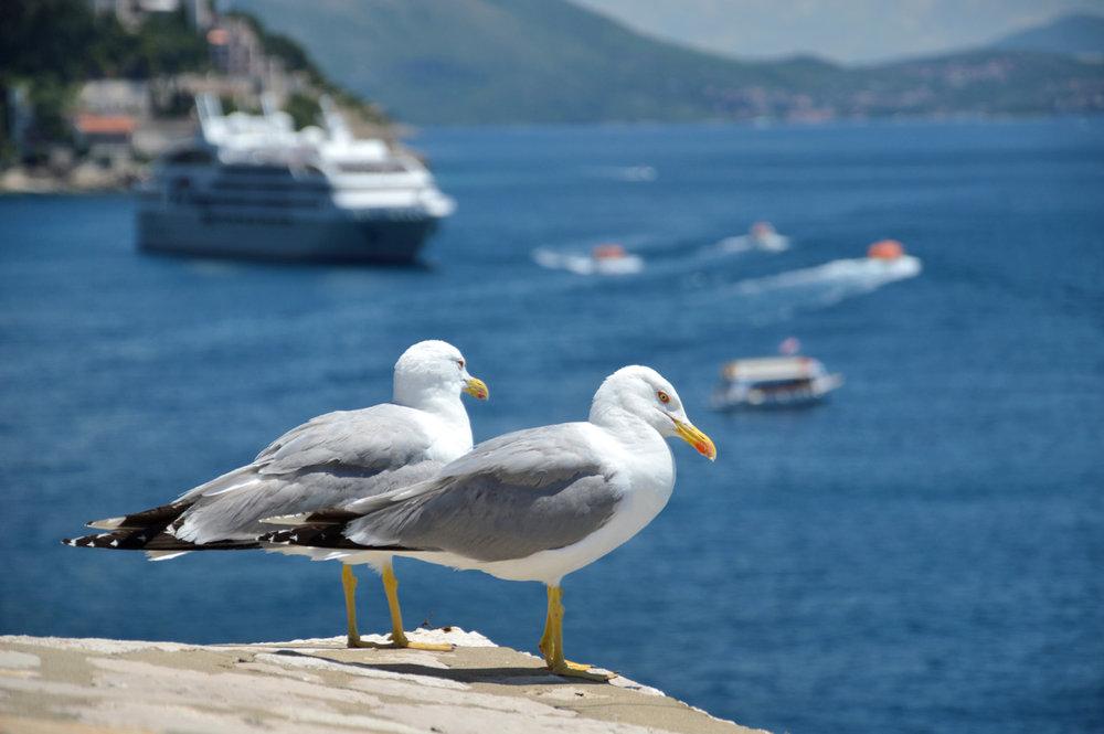 Seagulls also enjoy the views