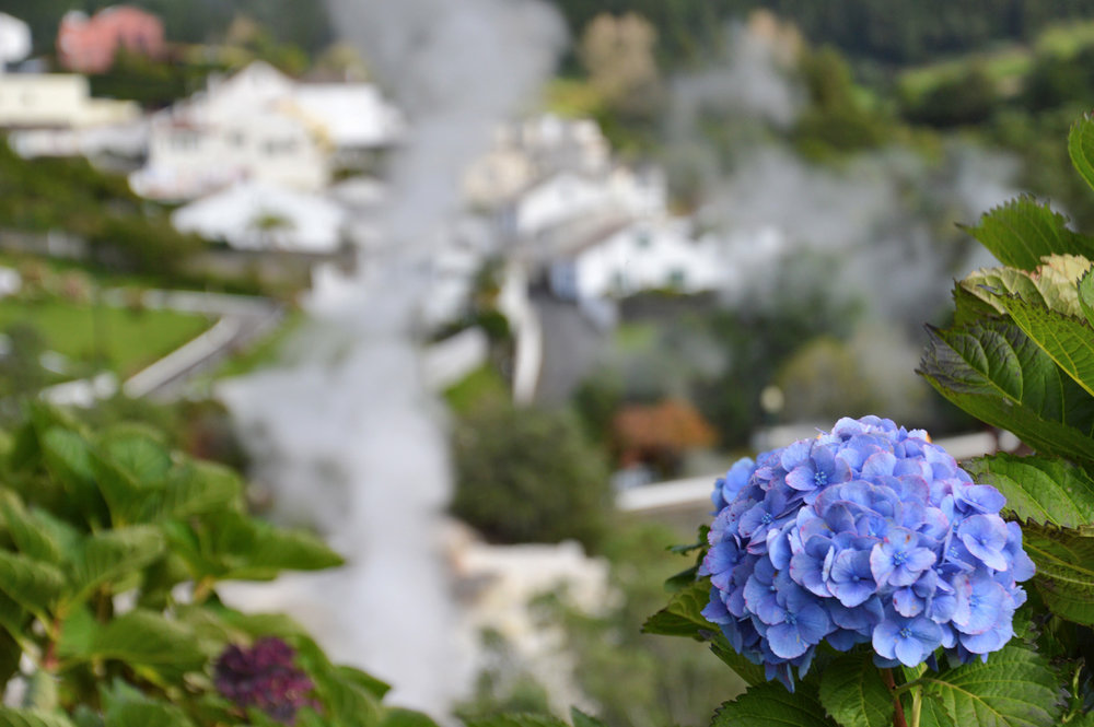 Hydrangeas can be spotted everywhere, especially in the summer