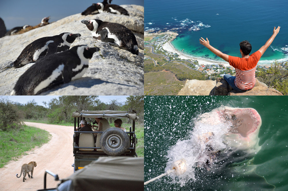 South Africa: Penguin beach, view from Lion's Head mountain, safari in Kruger Park, diving with sharks