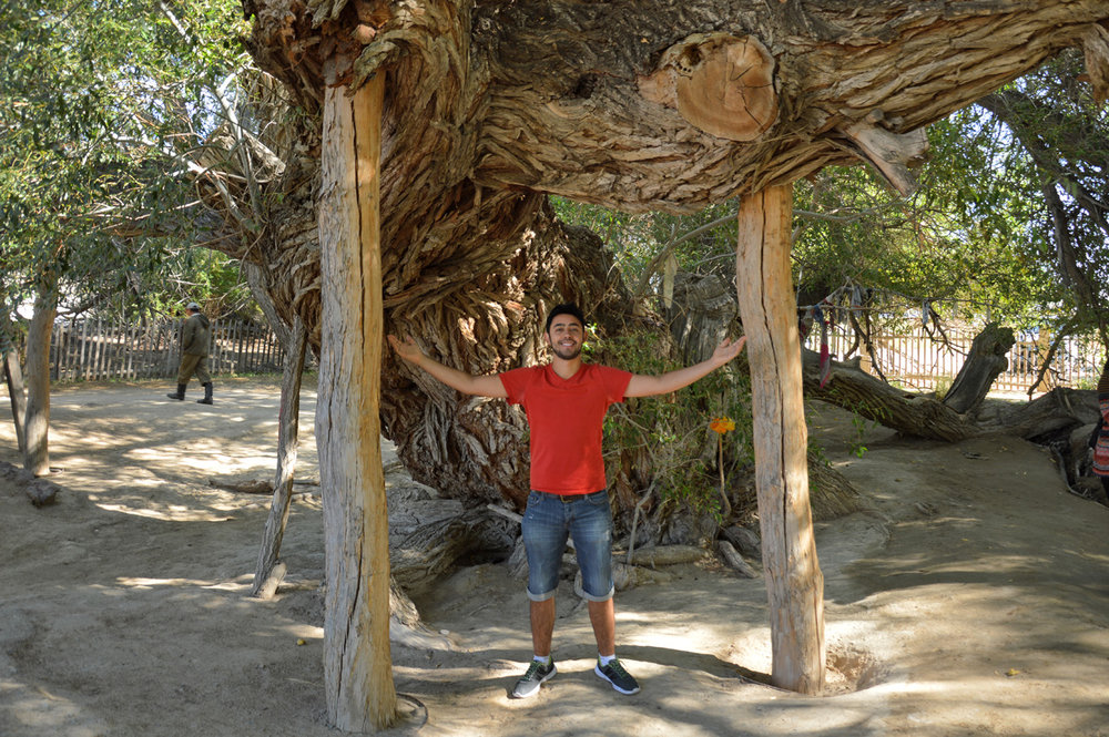 Over 300-year old tree (at least from what we understood)