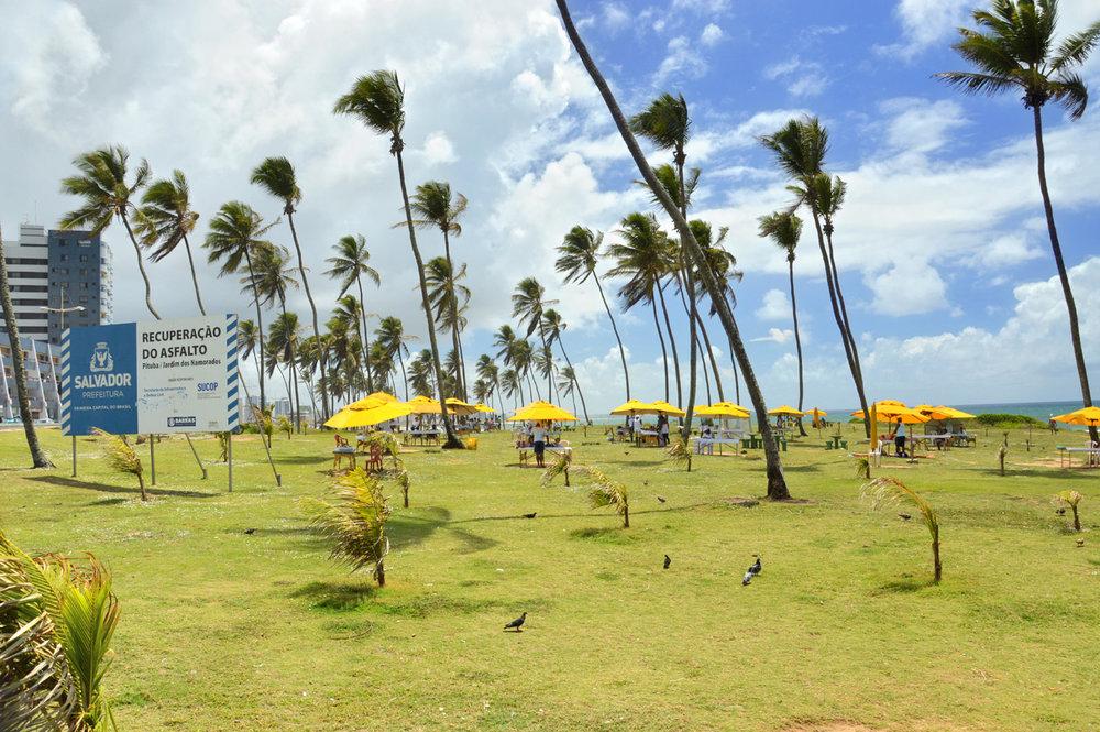 Coqueiros perto da praia