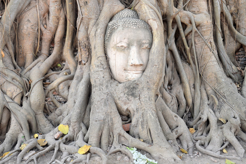 Buddha statue surrounded by branches at Wat Mahathat Temple