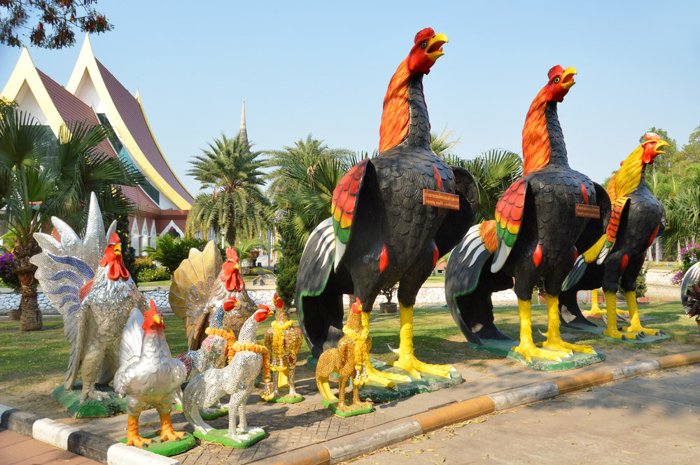 Roosters of Ayutthaya